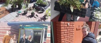 Kamperpoort is een stuk groener - collage_4_mei_geveltuintjes_kamperpoort