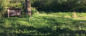 Groen, groener, groenst aan de Ulgerkamp - Foto_adoptiegroen
