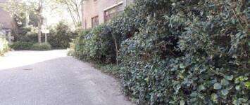 Bewoners onderhouden architectonisch groen Krekenbuurt - geveltuinen_krekenbuurt_def