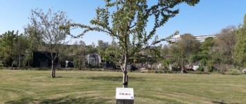 Fruitbomen in de Aa-tuinen - fruitbomen_aatuinen_def