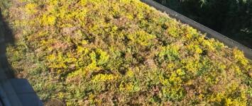 Aanleg Groene daken - XHPN1588