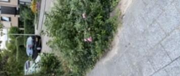 Groenplantsoen tussen Akeleiweg 24 en 26  - 675B1CA1-72E4-44CC-841A-07B0D8658DE7