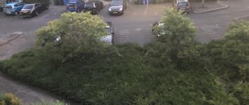 Grasveldje in plaats van bosjes - IMG_4114