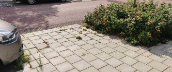 Trottoir Tesselschadestraat vergroenen - IMG_20200813_163002_compress94
