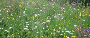 Bloemen in de bermen van de Volterbeek - 36-0
